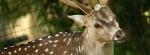 Deer Bali Zoo Park