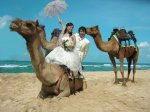 camel-photo-wedding