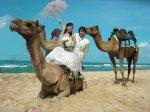 camel-photo-wedding